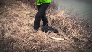 Смотреть онлайн Весенняя рыбалка на спиннинг: ловля щуки, окуня и судака