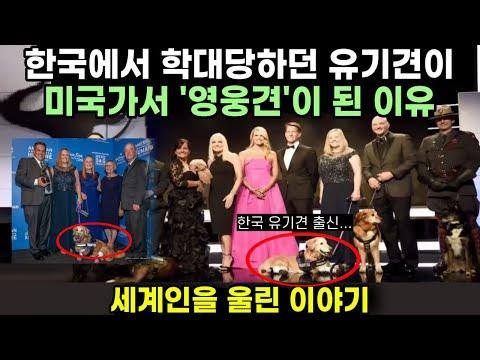 한국에서 학대당하던 유기견이 미국가서 영웅견이 된 이유. 치치