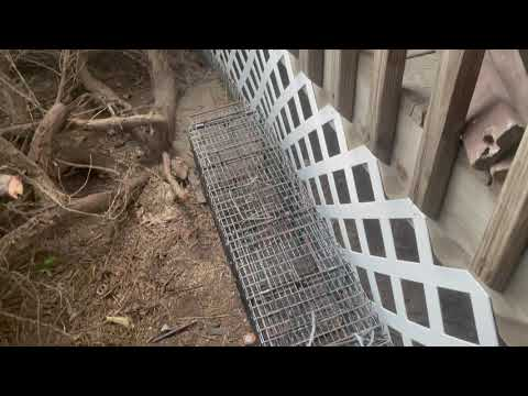 Skunk Causing a Stink for Homeowner in Belmar, NJ