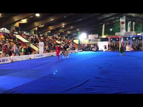 Wideo1: Wystawa championów w Lesznie