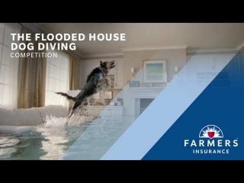 "Farmers Flooded House ""Dog Diving"" Competition"