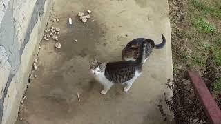 hravá mačička