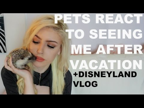 I LEFT ALL MY PETS FOR A WEEK (Disney Ride Gone Wrong)