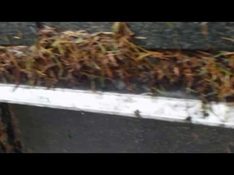 LeafFilter gutter guard in Seattle area with Fir Needles after 3 years. See how LeafFilter vs MasterShield stacks up at www.LeaflessInSeattle.com!