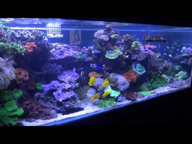 The Coral Shop Display Tank - 2000L SPS Reef Tank