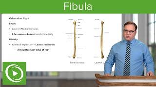 Osteology of the Fibula – Anatomy | Lecturio