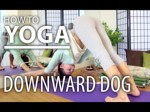Downward Dog. Three Downward Dog Yoga Poses With Props, For Beginners