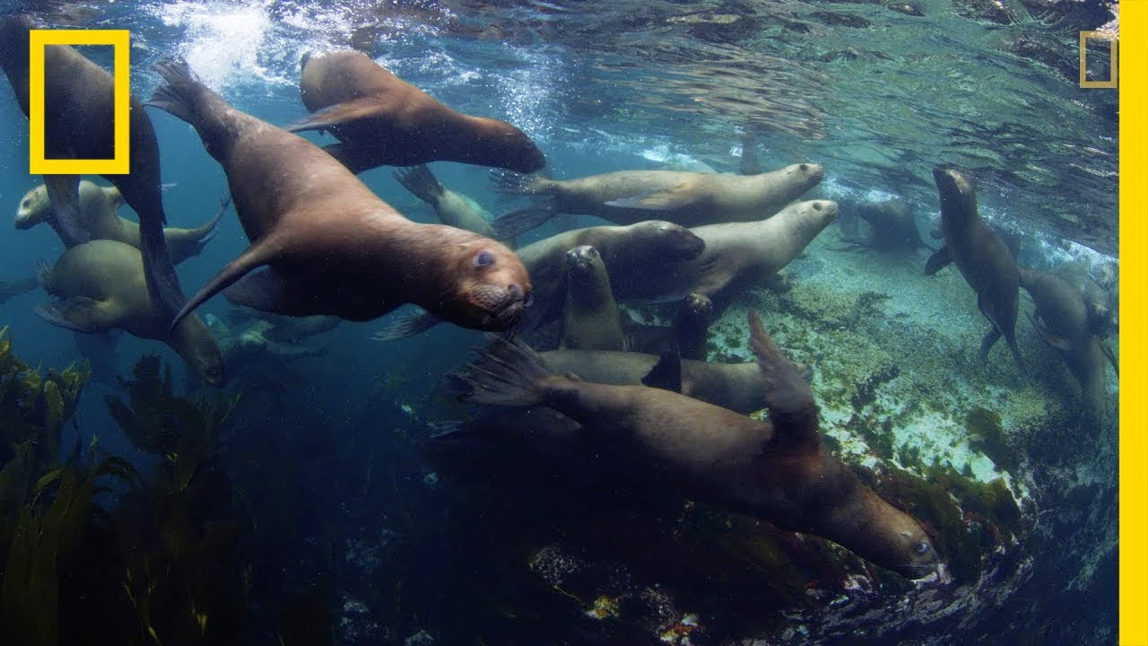Three New Marine Parks Protect Stunning Biodiversity | National Geographic thumbnail