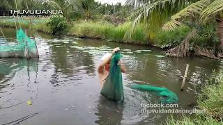 Bẫy Sông Dính Cá Trê Hồng Khổng Lồ l Bị Cá Tạt Mắm Bò Hóc Vào Mặt