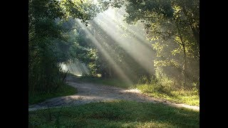 """Peaceful Music, Relaxing Music, Instrumental Music """"Pine Covered Path"""" by Tim Janis"""