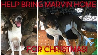 HELP BRING MARVIN HOME   THAILAND DOG RESCUE