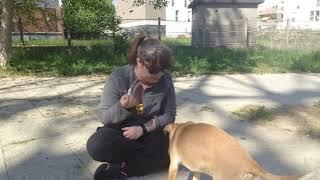 Comment apprendre à son chien à lâcher un objet