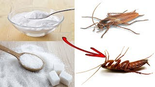 How to Get Rid of Roaches Fast and Naturally | Put This in The Corners Of House | Kill Cockroaches