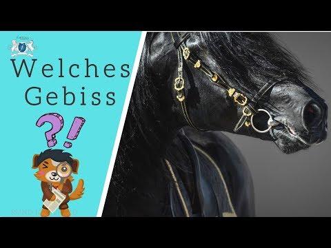 🧐 Welches Gebiss ist geeignet für Dein🐴 Pferd? Worauf ist zu achten?