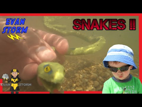 Throwback Thursday Rubber Snakes & Ocean Life Play Set Amazon Toys