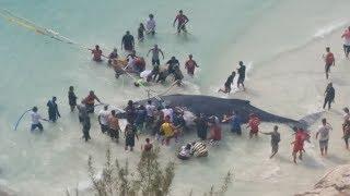 Jubarte resgatada em Arraial do Cabo/RJ