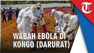 WHO Nyatakan Wabah Ebola di Kongo Sebagai Darurat Kesehatan Internasional