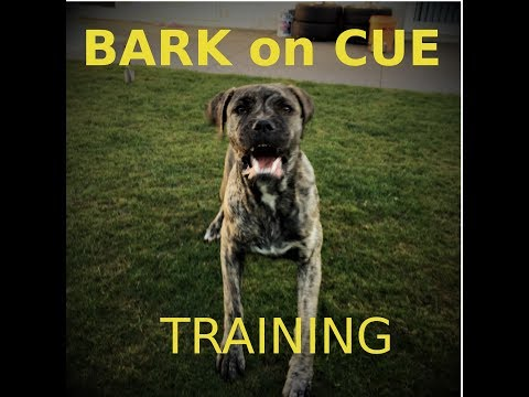 Download Train Your Guard Dog To Bark On Cue MP3 and Video
