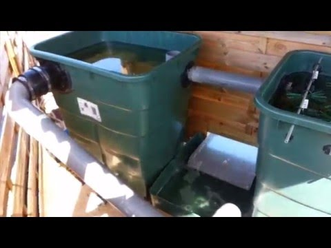 Bassin d ornement youtube - Filtre bassin canard montpellier ...