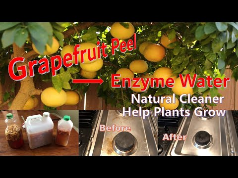 , title : 'Use grapefruit peel to DIY Enzyme water as natural cleaner. Result is awesome.