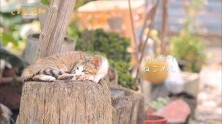 【愛媛県】の~んびり過ごす猫島の一日。