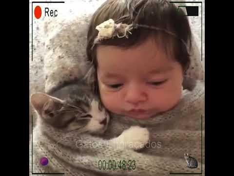 Gatos Engraados 2021- fotos gatos engraados fofos- videos de gatos fofos #shorts