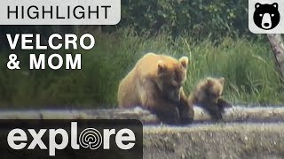 Velcro and Mom - Just The Two Of Us - Katmai National Park - Live Cam Highlights