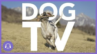 Dog TV: 7 Hours of Action-Packed Dog Entertainment! (NEW)