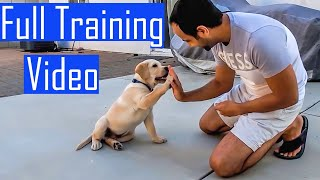 Labrador Puppy Learning And Performing Training Commands Compilation | Hindi With English Subtitles