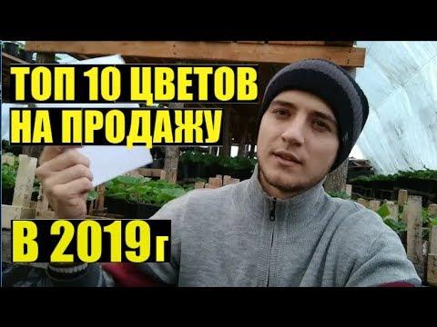 ТОП 10 однолетних цветов на продажу в мае/июне