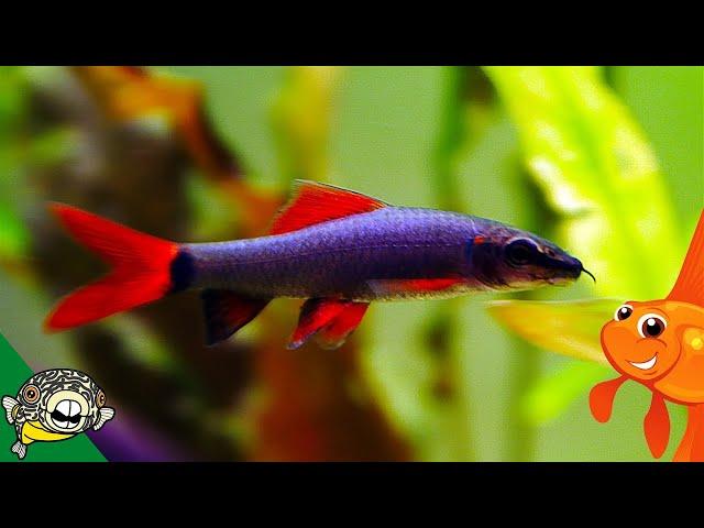 Tropical Fish Unboxing. Eartheaters, Rainbow Fish, Rainbow SHARK WEEK 2017
