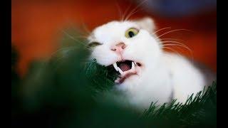 ТОП Животные подборка. Приколы с животными. Смешные коты и собаки