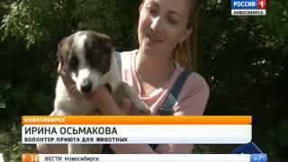 Новосибирцы смогут забрать кошек и собак из приюта