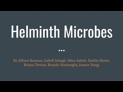 Mecanismul de acțiune al medicamentelor antihelmintice