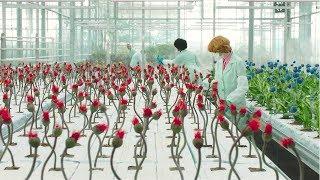 【穷电影】专家培育能让人开心的神秘植物,可一开花,却引发巨大灾难