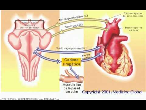 Tanto las tuercas afectan sobre la presión arterial
