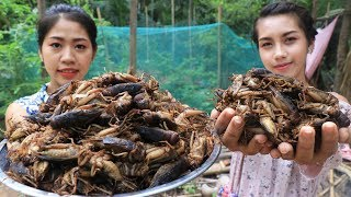 Yummy cooking Crickets fry recipe - Cooking skill