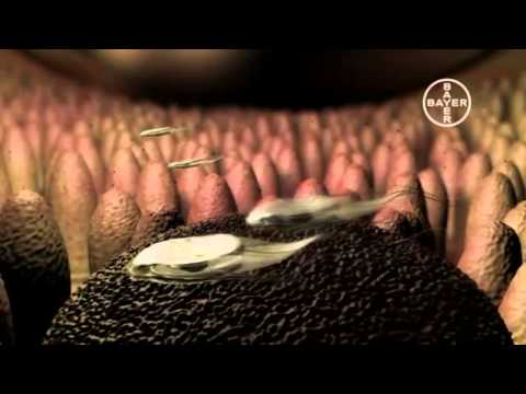 Tratarea solului giardia