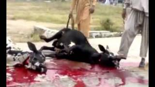 preview picture of video 'Ijtamai Qurbani in Sector G-10/3, Jamia Masjid, Sheraz Market, Islamabad (2010) part 1 of 2'