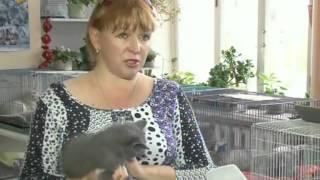 Смотреть онлайн Полезная информация о кормлении кошек
