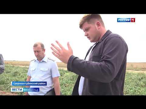 В Волгоградской области Управлением Россельхознадзора проведен карантинный мониторинг растениеводческой продукции на овощных плантациях
