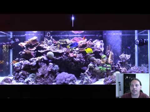 Video How I Dealt with Ich Without Medication in My Reef Tank.