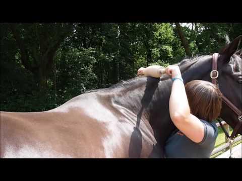 Come usare il prodotto sul cavallo - zona della criniera
