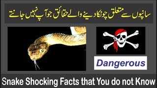 Snake Shocking Facts that You do not Know