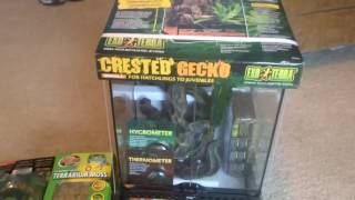 CRESTED GECKO SETUP AND UNBOXING!!!