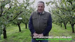 Frutticoltura, buone prassi e innovazione in agricoltura