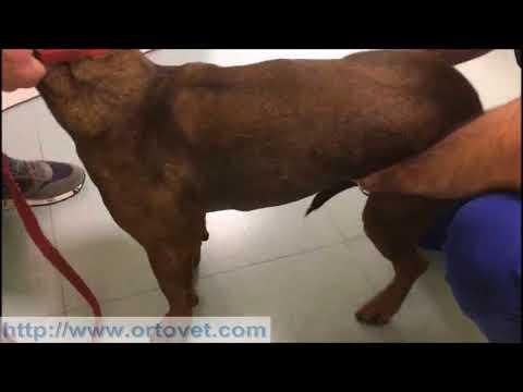 Dolore alla schiena in iniezioni trattamento regione lombare