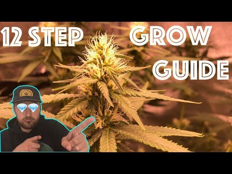 Easily Grow Quality Cannabis from the comfort of your Home!