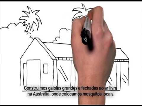 Fiocruz desenvolve tecnologia para combater o Aedes aegypti