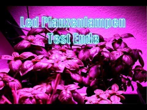 LED Pflanzen Lampen Langzeit Test Ende #03